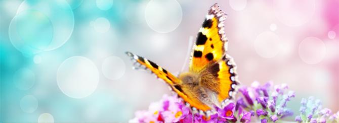 'Chaque être est une fleur  qui ne demande qu'à s'épanouir'. Inconnu